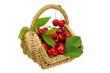 Kirschen im Korb - cherries in basket 01