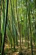 Fototapeten,zen,ausspannend,holz,bambus