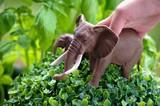 Enfant jouet elephant