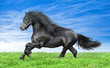 Friesian horse on a blue sky background