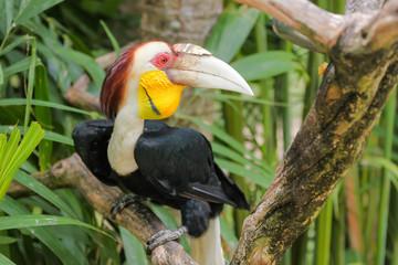 a Nice Hornbill