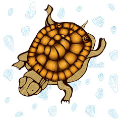turtle ocean wild stencil stain glass