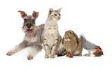 Group of Domestic Pets With Dog, Cat Rabbit and Birds - 42847770