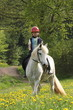 Ausritt Mädchen mit Pony