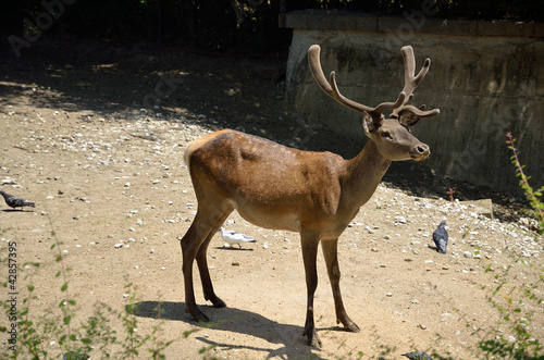 A deer in the Zoo