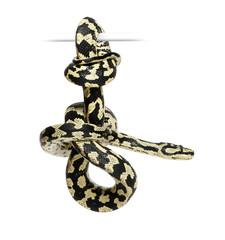 Jungle Carpet Python, Morelia spilota cheynei, black and yellow