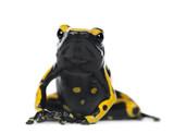 Fototapete Isoliert - Ausgeschnitten - Reptilien / Amphibien
