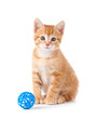 Cute orange kitten sitting next to a toy on white