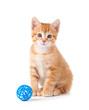 Cute orange kitten sitting next to a toy on white