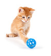 Cute orange kitten playing with a toy on white.