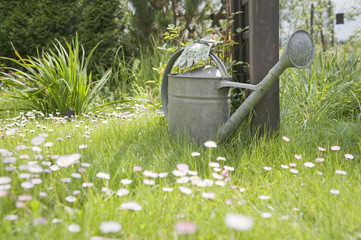 Watering can and garden gloves in spring garden