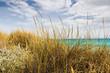 Dünengras-Küste an Mittelmeer