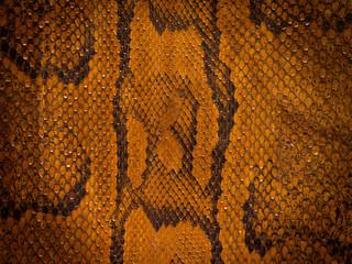 Snake Leather Background