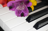 flower on piano