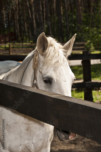 horse white suit for the fence