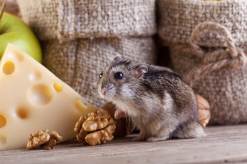 Rodent heaven - hamster or mouse in the pantry