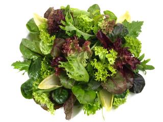 Blattsalat Mix