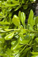 Lush green bush. Summer season.