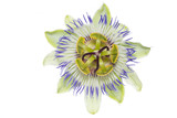passiflora on the white