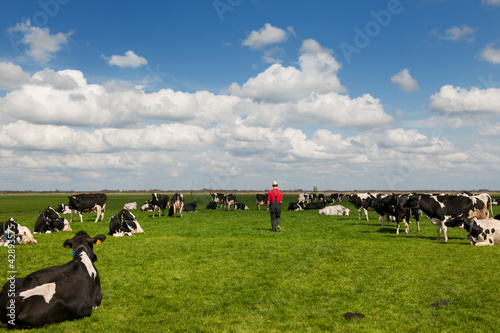 farmer walking in meadows with livestock