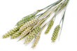 Weizen, große DOF