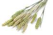 Weizen, geringe DOF