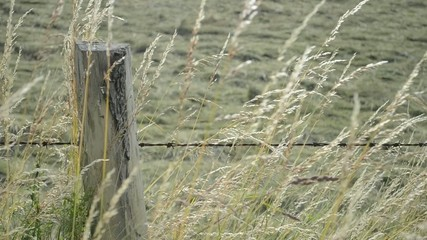 Gras vor gemähter Wiese farbig und schwarz-weiß