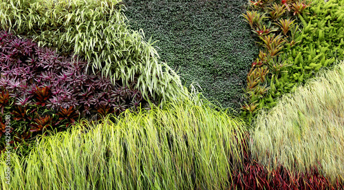 Vertical Garden of various plants