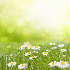 Daisy flowers on meadow floral abstract background