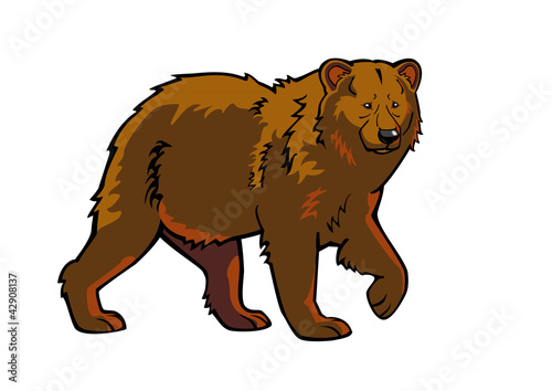 brown bear isolated picture