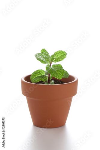 小さな植木鉢の小さな新芽