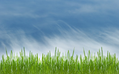 green grass with water drops on meadow on blue sky