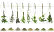 canvas print picture - Fresh herbs hanging on a rope.