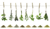 Fresh herbs hanging on a rope. - 42913597