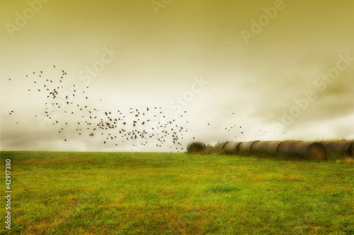 Serene Field with bales of hay and birds flying
