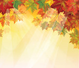 Fototapety Vector of autumnal leaves on yellow background.