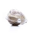 Auster mit Perle - 42920514