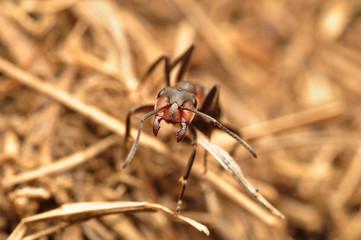 Mrówka_3