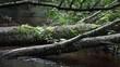Fallen tree in a forest stream