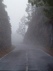 Road covered in mist