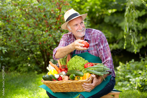 Senior gardener is presenting a basket full of vegetables