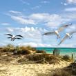 Sommer-Urlaub: Sandstrand, Meer und Möwen