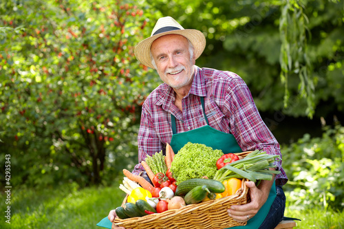 Senior gardener with a basket of vegetables