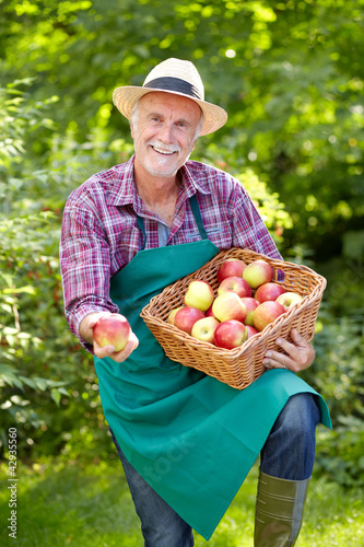 Senior gardener is presenting apples