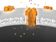 Potassium Ion Channel - inactive