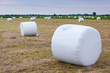 Wrapped bales of hay in a Dutch meadow ready for transport.