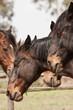 Cavallo maremmano, Parco dell'Uccellina, Toscana