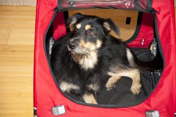 Junger Mschling in Hundebox