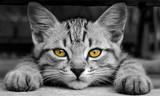 Fototapete Schwarz - Hübsch - Haustiere