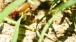Ants having something to eat